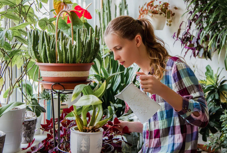 Советы цветоводам - любителям